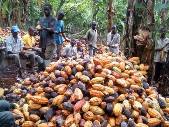 Exploitation of labour rights in Chocolate production is ongoing